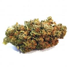 Orange Bud INDOOR  - 2